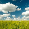 Cloud Computing: What it Means to You