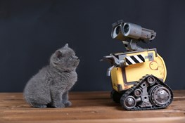 AI and Cats: A Wonderful Love Story in the Digital Age