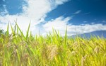 Cloud Computing and Carbon Footprints: Why Cloud Solutions Are Green Solutions